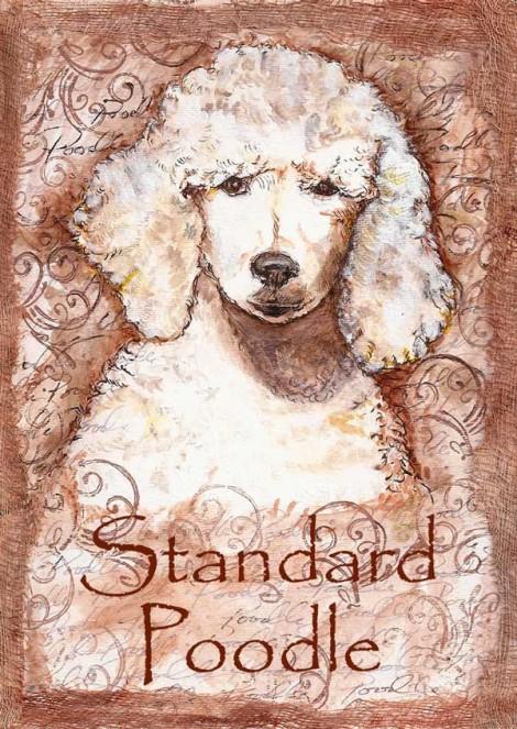 Sandard Poodle
